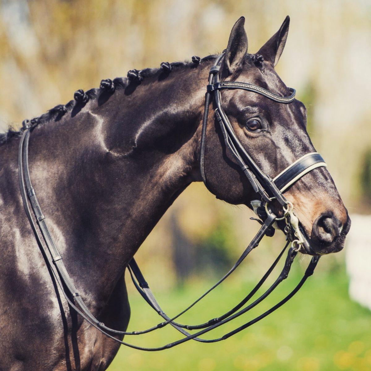 千葉県八街市の乗馬クラブ CIRCLE E HORSE FARM